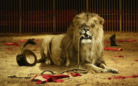 lion-ate-the-tamer-wallpaper-1