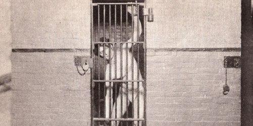 houdini_jail
