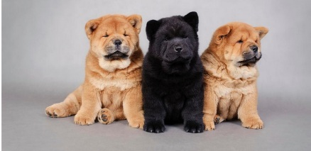3 Chows