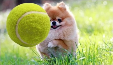 Pom with ball